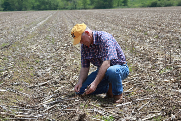 New Madrid County extension agent, Sam Atwell, inspects corn residue in a field before planting cotton.